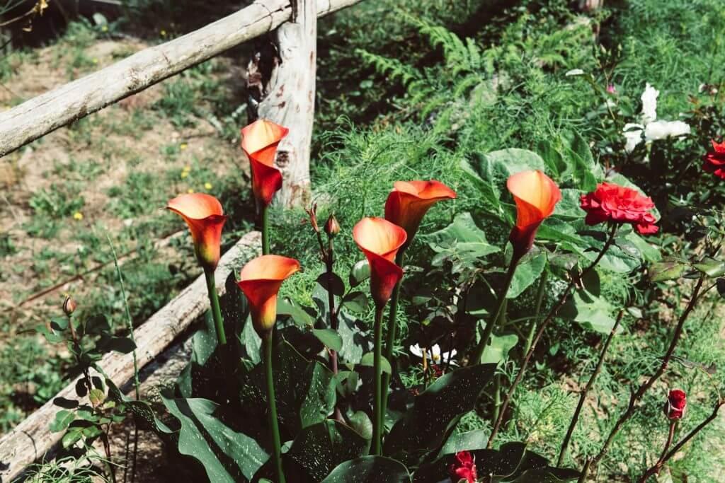 bioittica-della-sorgente-fiori
